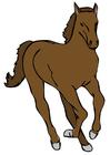 immagine cavallo