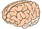immagine cervello
