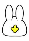 immagine coniglio - dietro