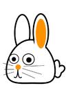 immagine coniglio - obliquo