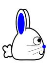 immagine coniglio - profilo
