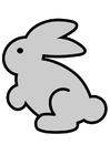 immagine coniglio