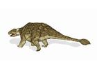 immagine dinosauro - ankylosaurus 2