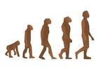 immagine evoluzione del uomo