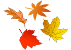 immagine foglie d'autunno
