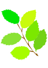 immagine foglie primaverili