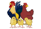 immagine gallo, gallina e pulcini