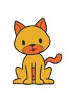 immagine gatto