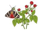 immagine lamponi con farfalla