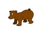 immagine orso