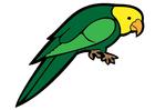 immagine pappagallo