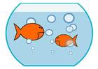 immagine pesce rosso