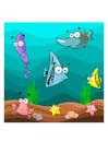 immagine pesce