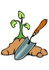 immagine piantare un'albero