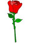 immagine rosa rossa