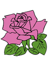 immagine rosa