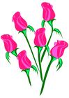 immagine rose