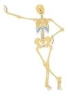 immagine scheletro