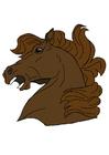 immagine testa di cavallo