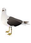 immagine uccello - gabbiano