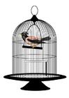 immagine uccello in gabbia
